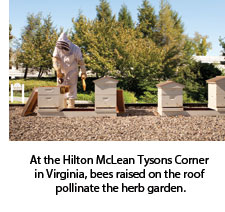 Bee hives at Hilton McLean Tysons Corner