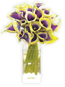 Vermeer Calla Lillies from Organic Bouquet