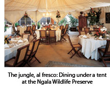 Dining at the Ngala Wildlife Preserve
