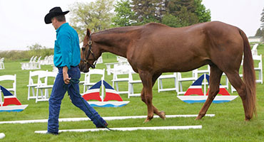 Team Building With Horses: Meetings & Conventions